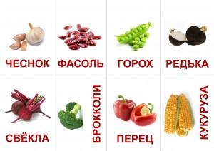 карточки_ОВОЩИ_2
