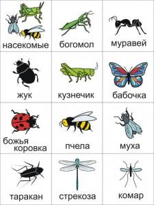 pecs насекомые