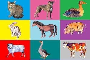 пазлы животные