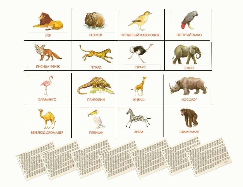 Карточки Домана Животные Африки